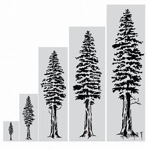 Stencil1, 48, In, Redwood, Tree, Stencil-s1, Rwt, 49