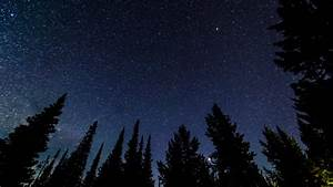 Night Sky Timelapse 04 Dolly R Forest Pine Trees Stock ...