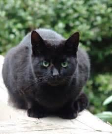 black cats with green 13026590 1c5837b708 z jpg zz 1