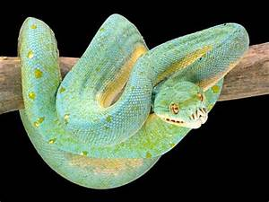 17 Best images about Snakes on Pinterest