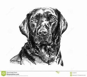 Black Labrador Illustration Stock Illustration ...