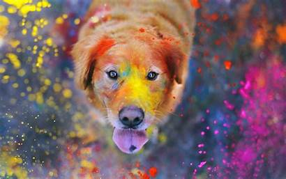 Paint Dog Colorful Splatter Animals Labrador Desktop