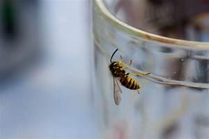 Pflanzen Gegen Wespen : wespen vertreiben wespennest entfernen garten tipps ~ Frokenaadalensverden.com Haus und Dekorationen