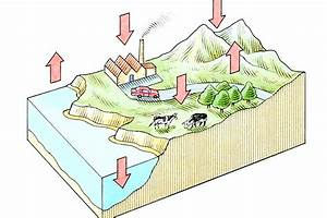 What Does The Diagram Of The Co2 O2 Cycle Illustrate