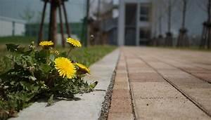 Urban Gardening Hamburg : urban gardening ich will das viertel ver ndern mittendrin das nachrichtenmagazin f r ~ Frokenaadalensverden.com Haus und Dekorationen