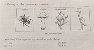 The Diagram Below Represents Four Organisms Green Plant