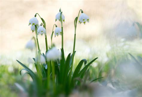 maerzenbecher foto bild jahreszeiten fruehling wald