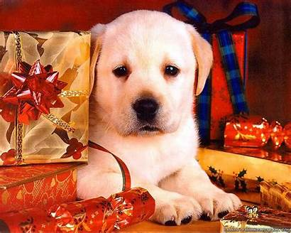 Christmas Dog Wallpapers Puppy Dogs Puppies Desktop