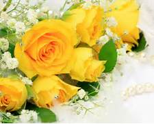 yellow rose wallpaper beautiful - Wallpaper  Beautiful Pictures Of Yellow Roses