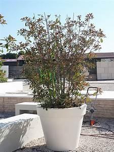 Tres Grand Pot De Fleur Exterieur : pot toscane en pierre reconstitu e tr s grand pot de ~ Dailycaller-alerts.com Idées de Décoration