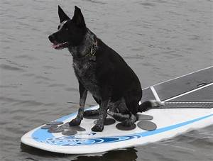 Pup Deck Sup Traction Pad  U00bb Petagadget