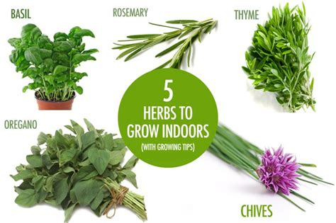Herbs That Can Grow Inside by Food Of Canada 10 Tips To Help Canadians Reduce
