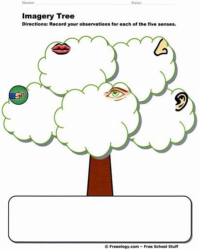 Imagery Tree Graphic Organizer Organizers Questions Wh