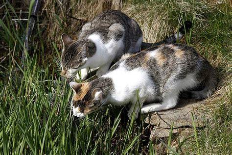 Schwertfarn Giftig Für Katzen by Giftige Pflanzen F 252 R Katzen
