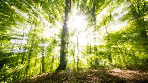 Green Forest Picture Hd by Green Forest Hd Wallpaper Wallpaperfx