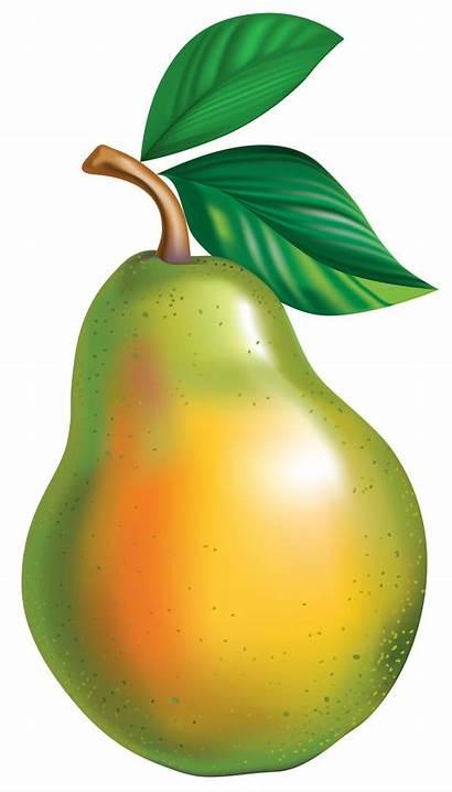 Pear Clipart Transparent Fruit Asian Clip Pyrus