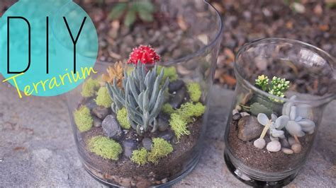 diy indoor garden cactus terrarium how to by