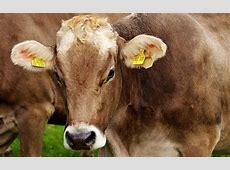 Alimentos de Origen Animal Información y Características