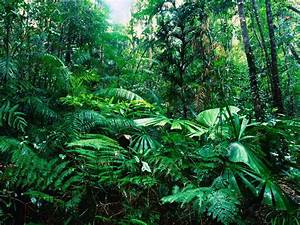 Tropical Rainforest - Green Plants On The Earth - World Visits