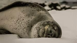 Que Faire Pour Bien Dormir : canicule nos conseils pour bien dormir quand il fait chaud ~ Melissatoandfro.com Idées de Décoration