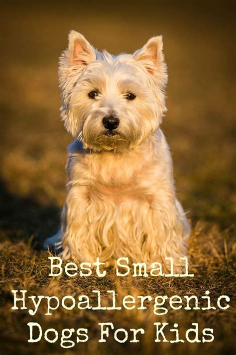 Small Non Shedding Dogs For Families by 17 Best Ideas About Best Dogs For On