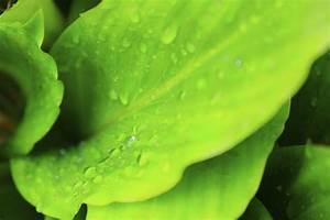 Schädlinge Zimmerpflanzen Klebrige Blätter : bl tter pflegen wer mag es schon staubig zimmerpflanzen ~ Lizthompson.info Haus und Dekorationen