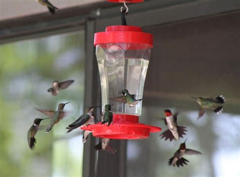 top 28 when do i put hummingbird feeders out what kind