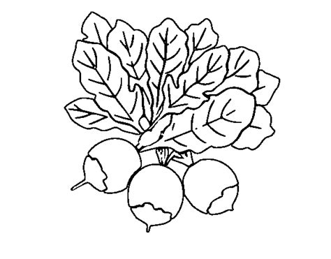 beet color three beet coloring page