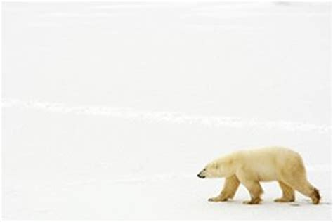 10 Facts About Polar Bears for Kids