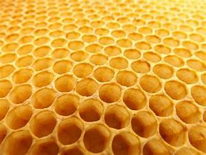 Honeycomb Beekeeping · Free photo on Pixabay  Honeycomb