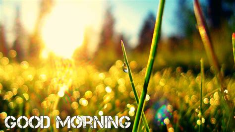 Morning Animation Wallpaper - morning wallpapers free