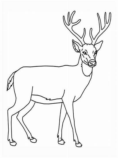 Deer Coloring Ausmalbilder Hirsch Animal Malvorlagen Ausdrucken