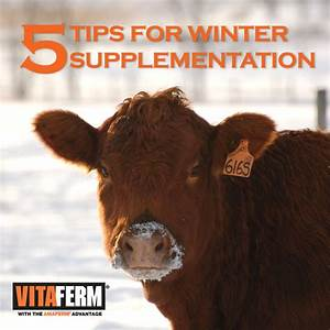 5 Tips for Winter Supplementation of the Beef Cow Herd ...