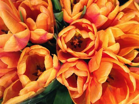 fiori per l anima associazione gli occhi dell anima i fiori per l anima le