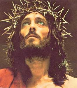 1000+ images about Crown Of Thorns on Pinterest