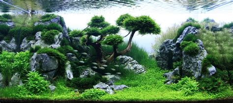 Aquascaping Layouts by Pet Habitat South Africa