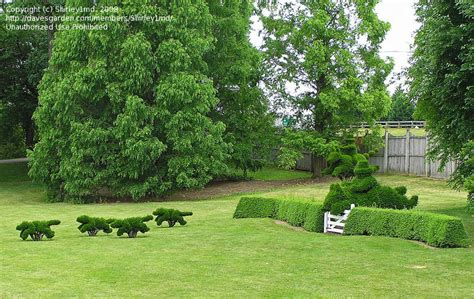 topiary garden maryland photo of ladew topiary gardens