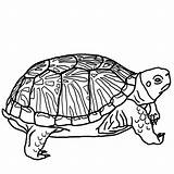 Turtle Coloring Printable Pages sketch template