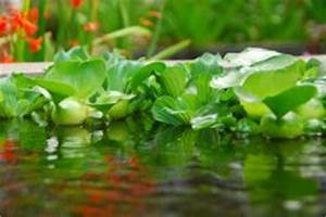 Essig Gegen Algen : moos und algen entfernen diese mittel helfen ~ One.caynefoto.club Haus und Dekorationen