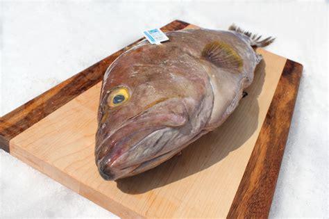 grouper fish eat benefit fillet nutrient gained