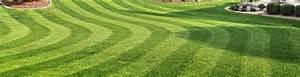 Moos Im Rasen Beseitigen : moos im rasen bek mpfen wir zeigen dir wie ~ Lizthompson.info Haus und Dekorationen