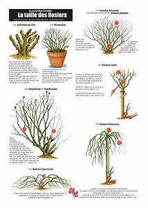 Comment Tailler Les Rosiers : filroses comment tailler ses rosiers ~ Nature-et-papiers.com Idées de Décoration