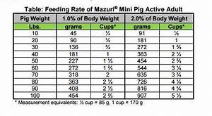 Feeding Your Mini Pig Recommended Healthy Diet Charming
