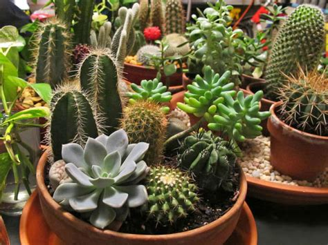 Keep Pests Off Cacti and Succulents   World of Succulents
