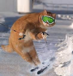 cat skiing object reference not set to an instance of an object