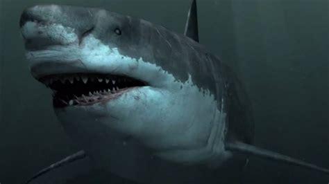 megalodon historys largest predator  mysteriously