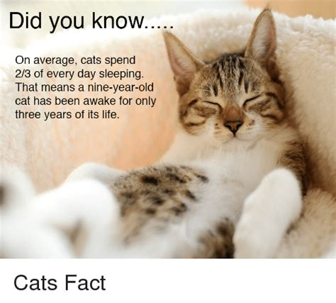 Cat Facts Meme - did you know on average cats spend 23 of every day sleeping that means a nine year old cat has