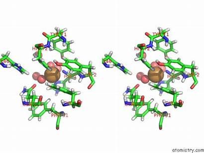 Copper Polysaccharide Cu Pdb Lytic Crassa Monooxygenase