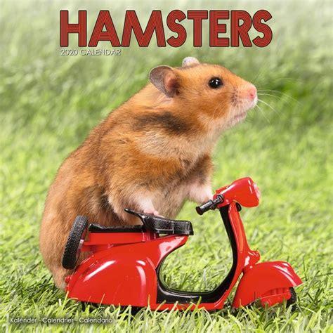 Hamsters Kalendarz 2021 Kup Na Posterspl
