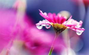 Pink flower macro photography, bright, water droplets ...
